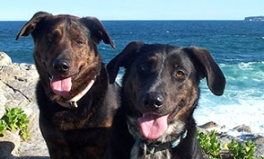 Pet Friendly Accommodation Happy Pet Gallery Dog friendly accommodation beach houses and dog friendly beaches means holidaying with dogs!