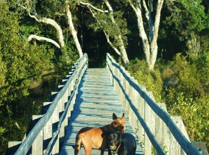 On the way to the dog friendly beaches at Sanctuary Bush to Beach House. A pet friendly accommodation beach house with dog friendly beaches for your holiday at Nambucca Heads near Valla Beach, Mid North Coast NSW