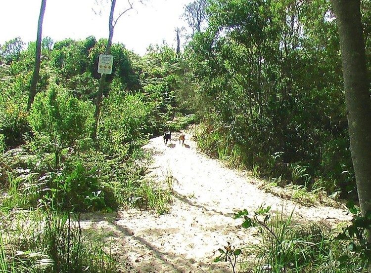 Just over the dune to the dog friendly beaches at Sanctuary Bush to Beach House. A pet friendly accommodation beach house with dog friendly beaches for your holiday at Nambucca Heads near Valla Beach, Mid North Coast NSW